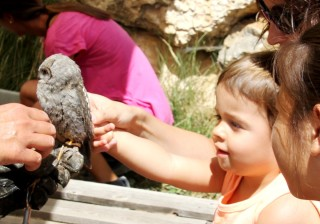 Small girls petting an owl