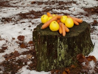 Apples and carrots on the log