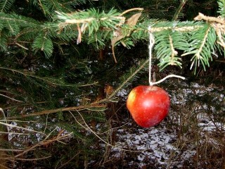 Apple on a Christmas tree