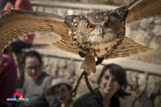 Free-flying birds of prey show