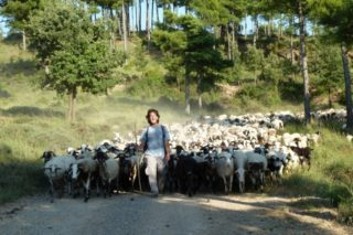 Eloi worked as a sheeper.